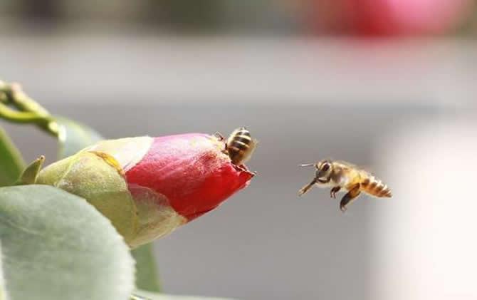 如何让蜂群快速变强群?