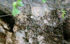 新收蜜蜂要多久才建巢?几天稳定?