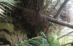 如何寻找野生蜜蜂窝?