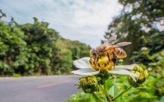 有关蜜蜂的资料有哪些?