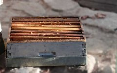 一个人能养多少箱蜜蜂?