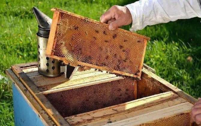 一个人能养多少箱蜜蜂