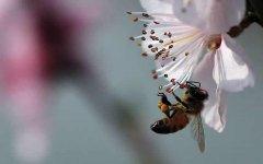 秋季怎么管理好蜂群?