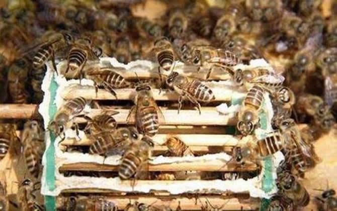 秋季蜂群管理