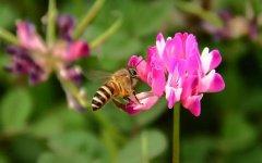 新手养蜂有哪些禁忌?