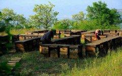 养蜂人一年收入怎么样?