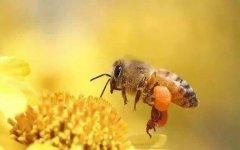 到哪里可以学蜜蜂养殖技术?