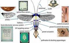 什么是蜜蜂仿生学?