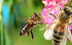 养一箱蜜蜂要多少成本?