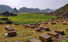 在农村养蜂有补贴吗?