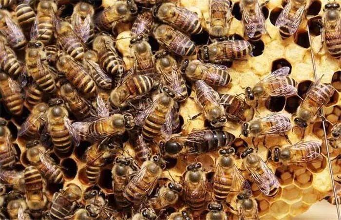 假蜂蜜是怎么做出来的?有毒吗?(教你鉴别真假蜂蜜)