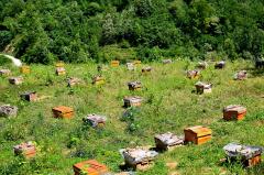 蜜蜂养殖十大忌讳是什么?(教你养蜂知识)