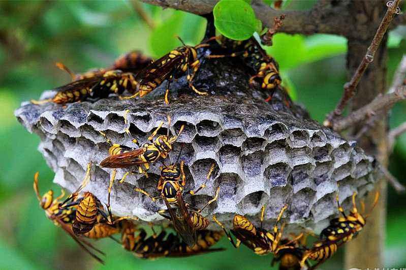 养100窝马蜂一年利润多少?赚多少钱?