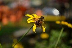 30只蜜蜂1只蜂王能繁殖吗?(几十只蜜蜂能繁殖起来吗)