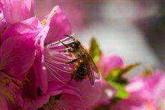 蜜蜂喜欢什么样的颜色?(蜜蜂会讨厌什么颜色的花)