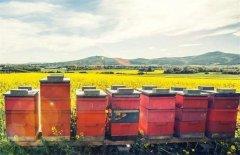 新手如何养好蜜蜂?(7个方法教你养蜜蜂)