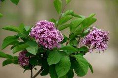 什么是蜜源植物?