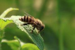 圆蜂桶蜜蜂满了怎么办?(蜜蜂过多的解决办法)