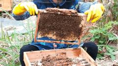 什么蜂箱养中蜂最好?(最好用最先进的蜂箱有哪些)