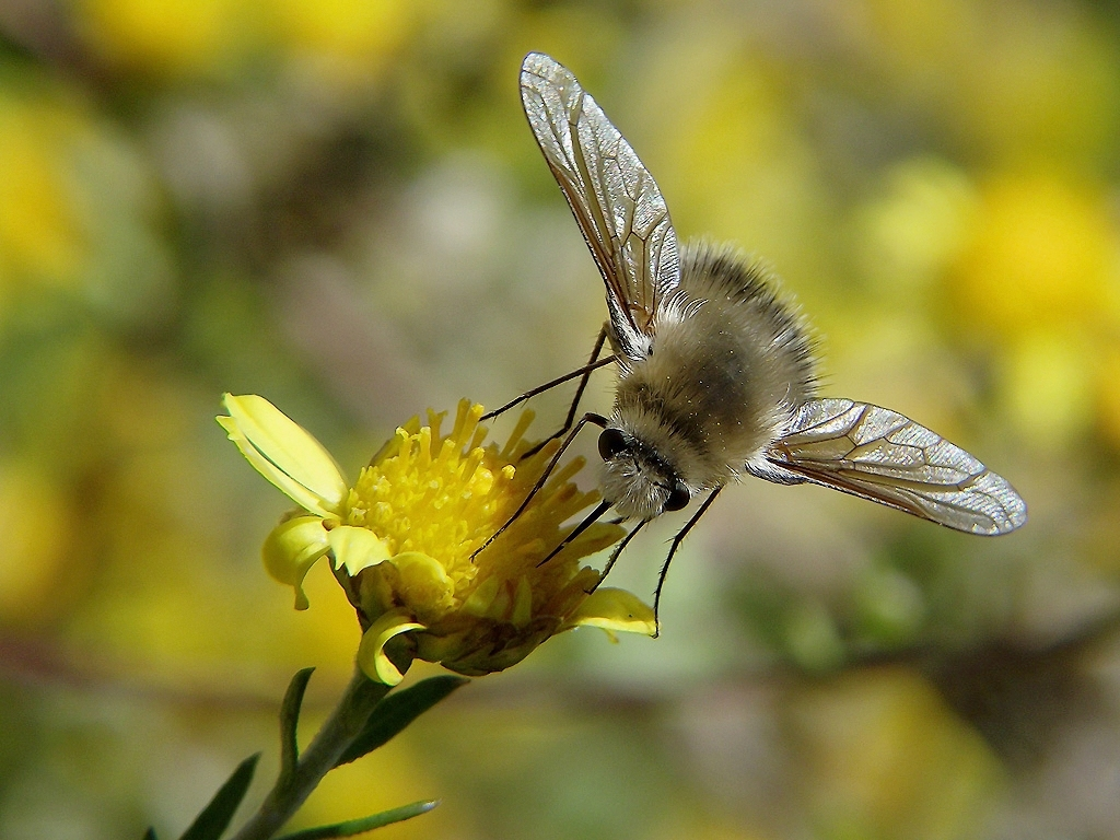 和蜜蜂长得差不多的是什么蜂(像蜜蜂的是什么蜂)