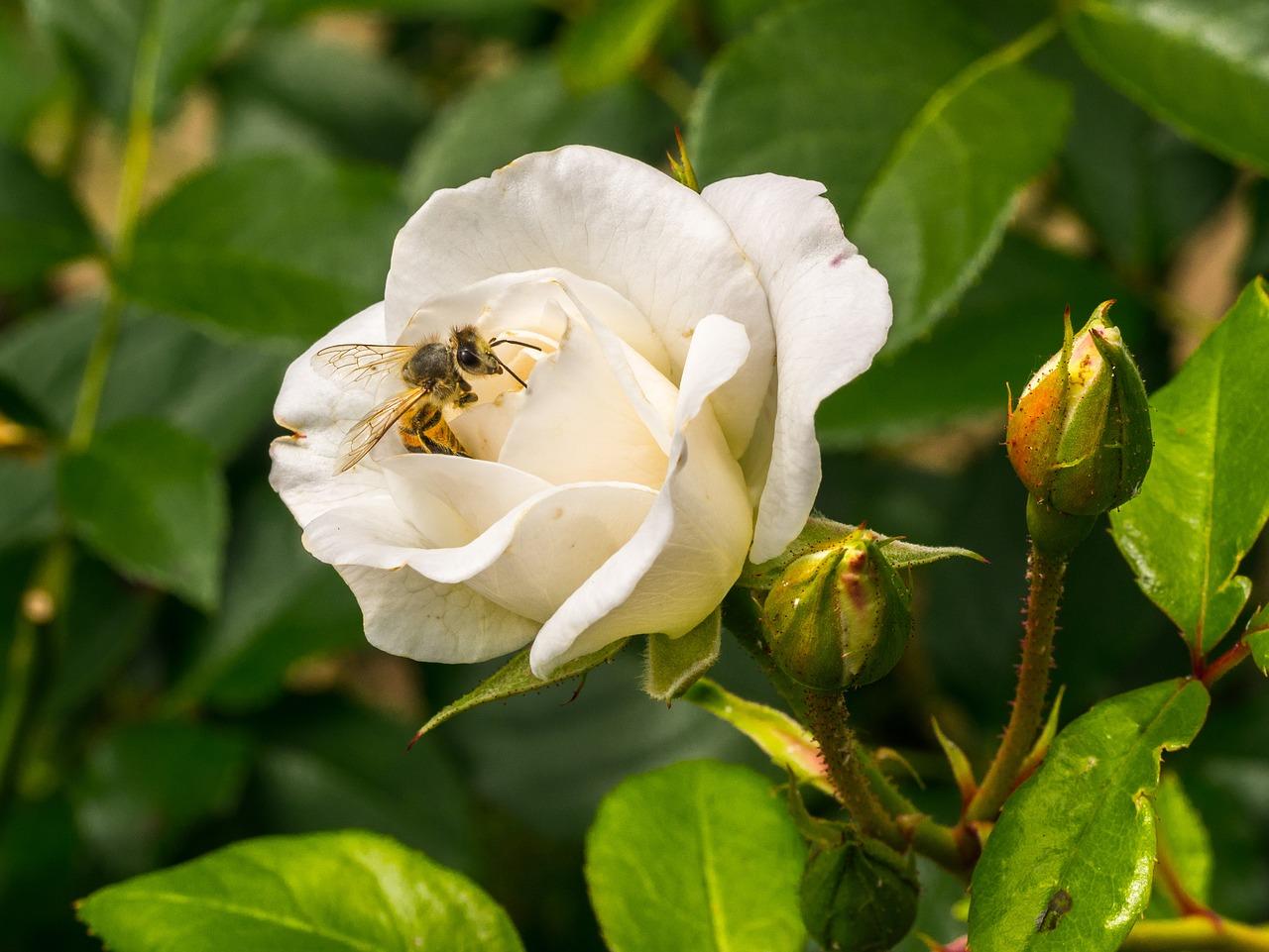 一箱蜂多少钱哪里能买到(买一箱蜜蜂大概多少钱)