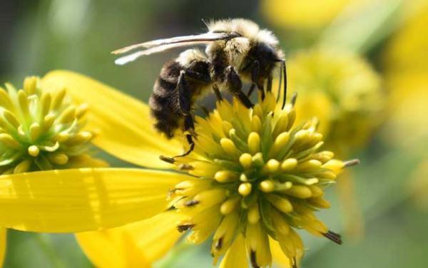 家里有好多小蜜蜂怎么办