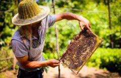 农村土蜜蜂高效养殖技术(最新养土蜜蜂的实用技术方法)
