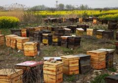 农村养蜜蜂能赚钱吗(养蜜蜂一年能赚多少钱)