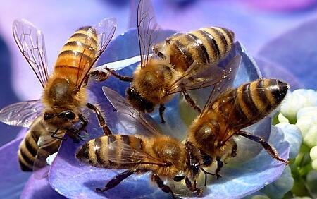 蜜蜂冬天如何过冬(蜜蜂的过冬方式)