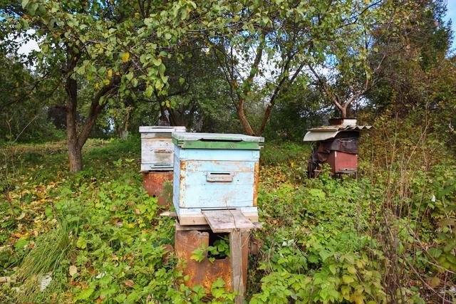 无公害养蜂技术(附带十条技术要求)