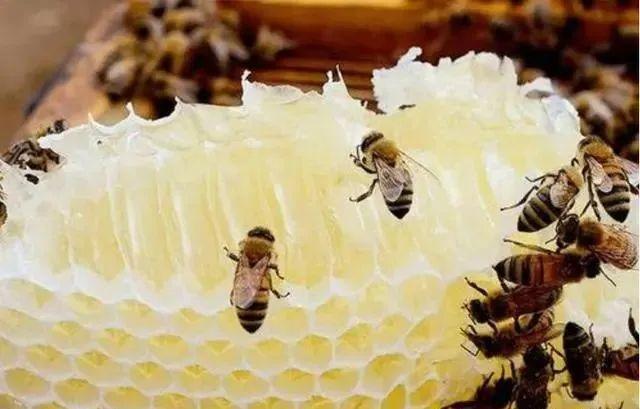 蜂蜜怎么样取蜜(养蜂怎么快速把蜂蜜取出来)