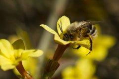 蜜蜂养殖实用技术