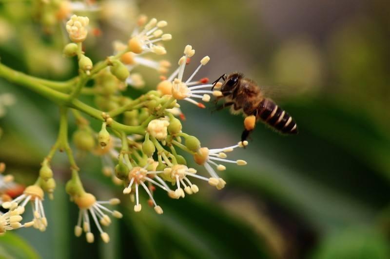 蜂蜜是蜜蜂的排泄物还是呕吐物(蜂蜜是分泌物还是排泄物)