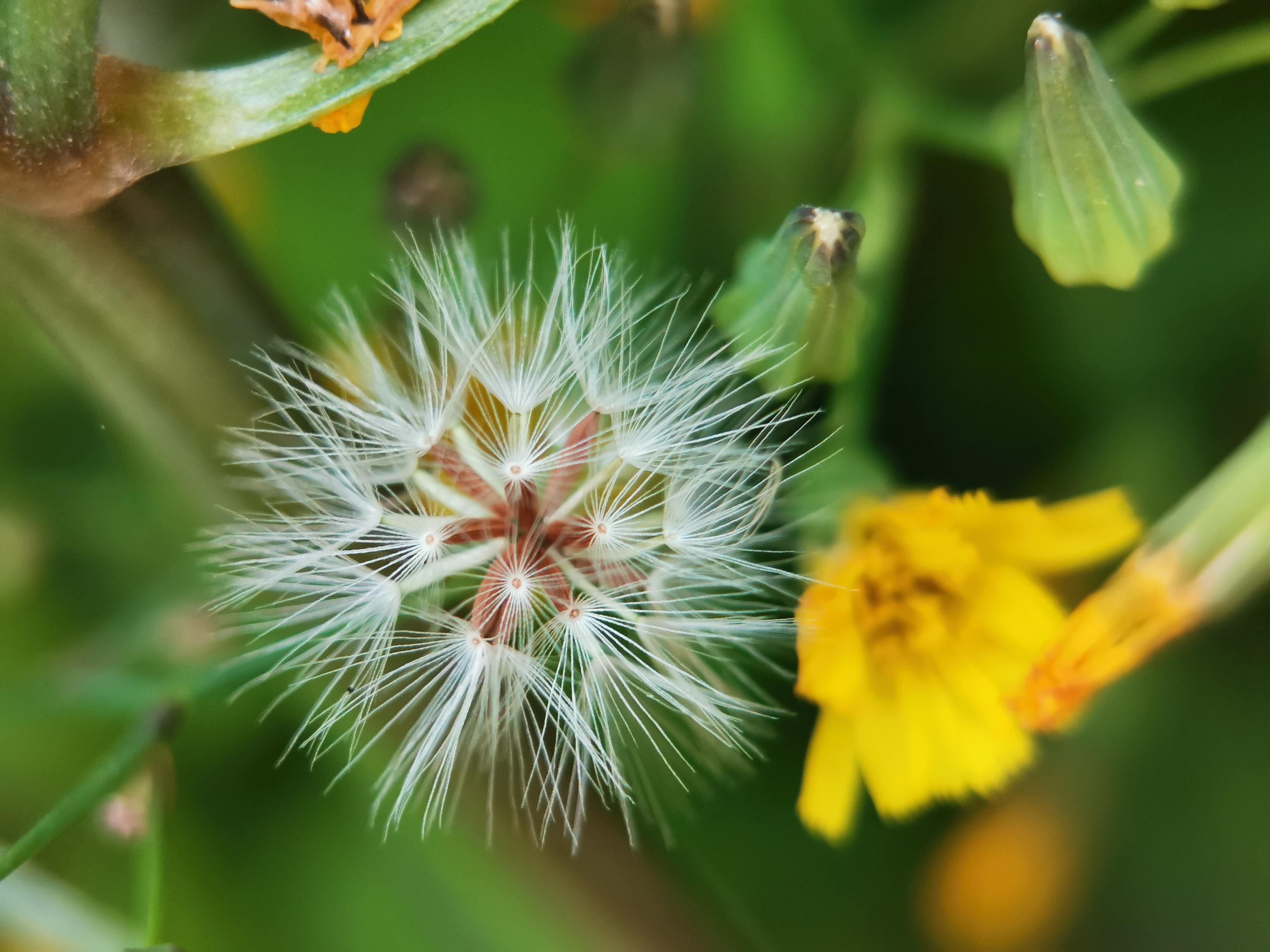 蜜蜂吃了花粉起什么用(蜜蜂吃花粉还是吃花蜜)