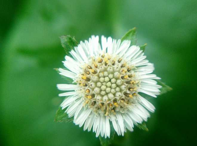 蜜蜂的花粉是干嘛用的(蜜蜂用花粉来干嘛)
