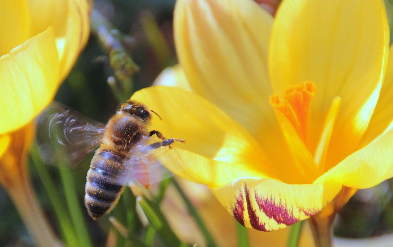 蜂蜜是单花好还是多花好(不同花的蜂蜜有区别吗)