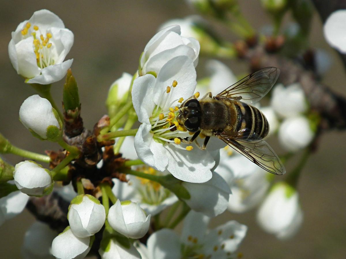 蜂螨药的种类及用法大全(治疗蜜蜂蜂螨虫的药有哪几种)