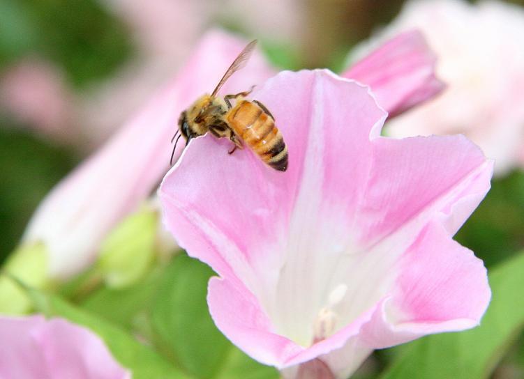 蜂螨的特点有哪些(大蜂螨的特点与防治方法)