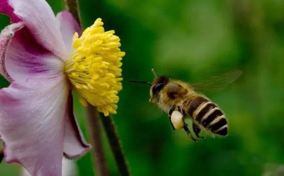 蜂螨是怎么产生的(蜂螨是怎么来的)