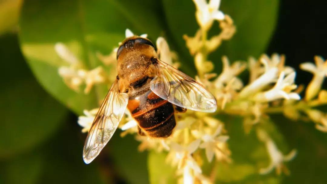 哪种蜜蜂好养(什么蜂种好养)