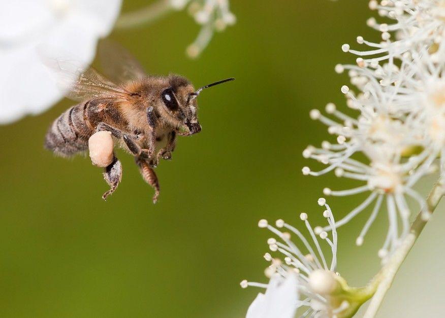 养蜂难不难(养蜂要注意什么问题)