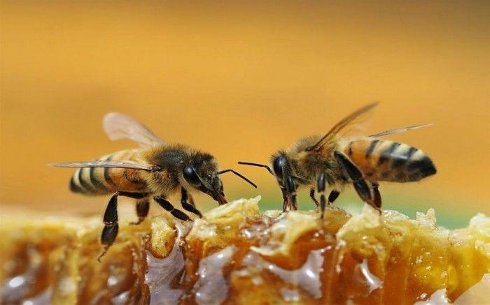 居民楼可以养蜜蜂吗(家附近有人养蜜蜂怎么办)