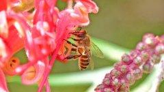 蜂蜜和花蜜的主要区别是什么(蜂蜜和花蜜有什么区别)