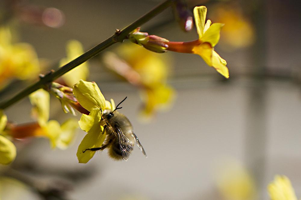 新手养蜂什么时候建蜂场最合适(养蜂需要什么样的场地)
