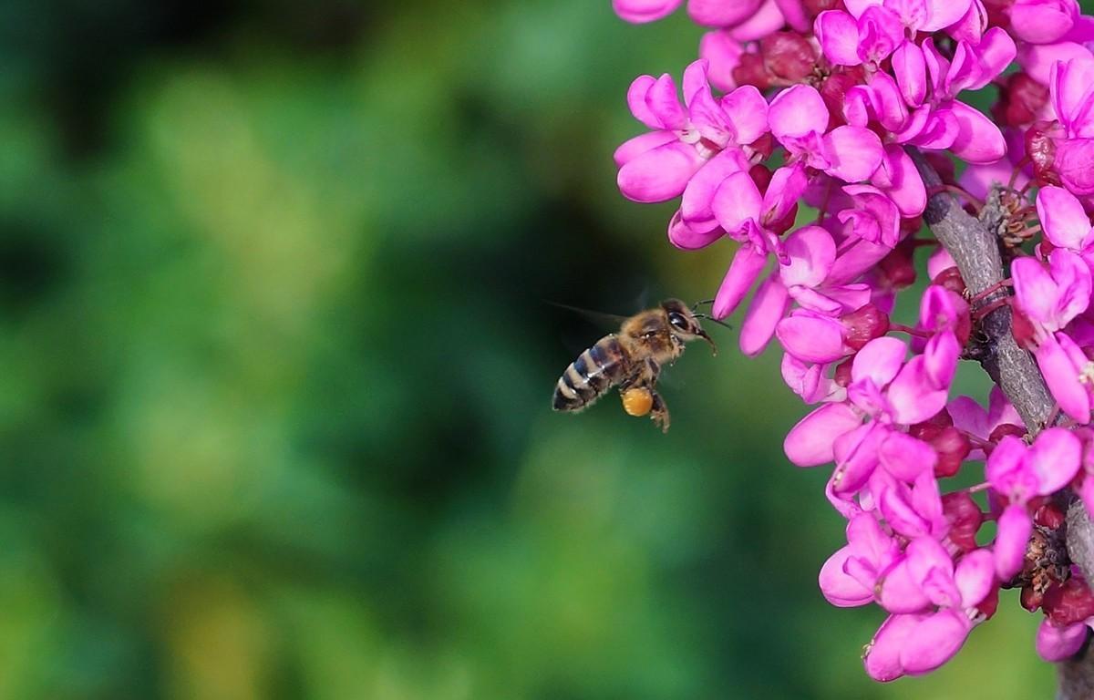 新手养蜂要先学什么技术(新手怎么学养蜂)
