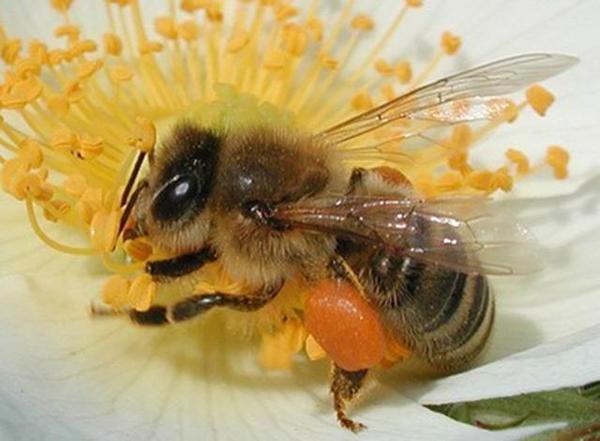 养蜂技术知识大全(实用养蜂技术资料)
