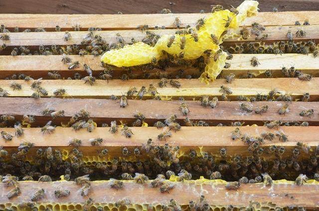想学养蜂技术去哪里学(学养蜂技术培训在哪里)