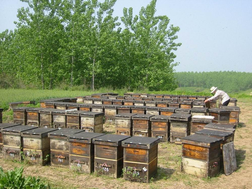 学养蜂需要多久能学成(新手怎么学养蜂)