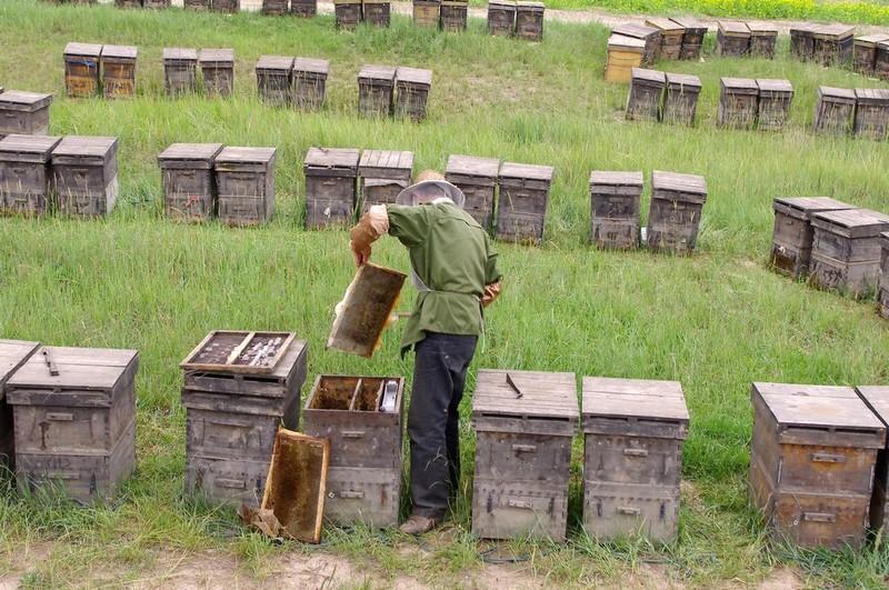 怎样学会养蜂技术(新手养蜂要先学什么技术)