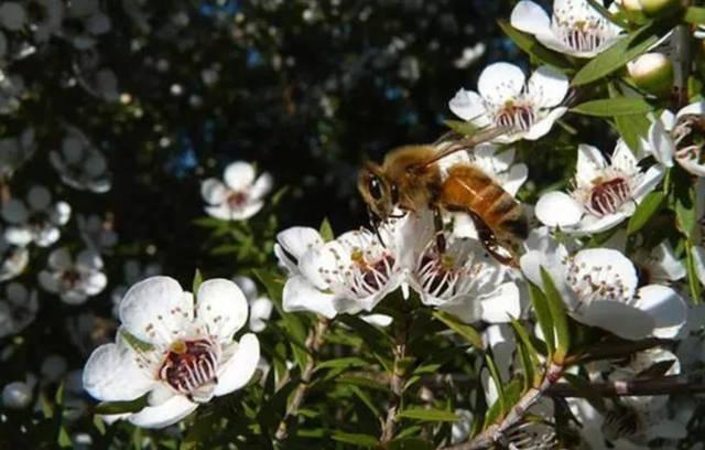 不同的花蜜有什么区别(不同花的蜂蜜有区别)